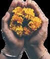 Marigold Solutions Inc